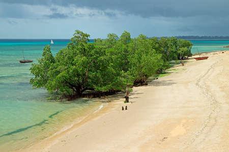 Mangrove trees and sandy beach on the tropical coast of Zanzibar island