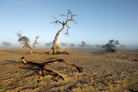 Scenic landscape with trees in mist, Kalahari desert, South Africa