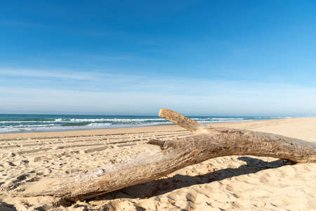 Cap Ferret, Arcachon Basin, France. Driftwood on the beach Banque d'images - 114912962