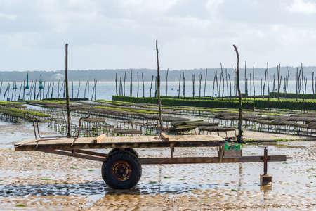 Cap Ferret (Arcachon Bay, France), oyster beds on the beach 版權商用圖片