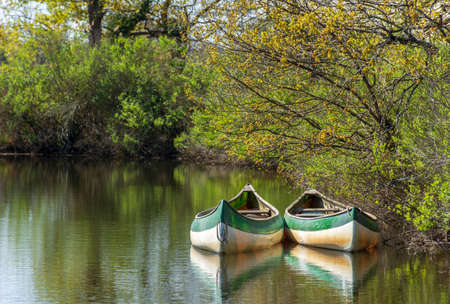 Bay of Arcachon (France), canoes on the river Leyre, also called the Little Amazon 写真素材