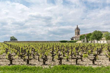 Médoc, France. Le vignoble de Margaux