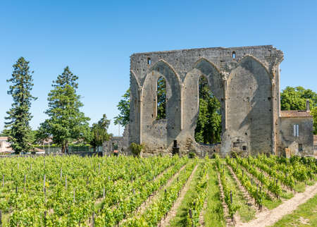 Saint Emilion, France. Vineyards and ruins in the village