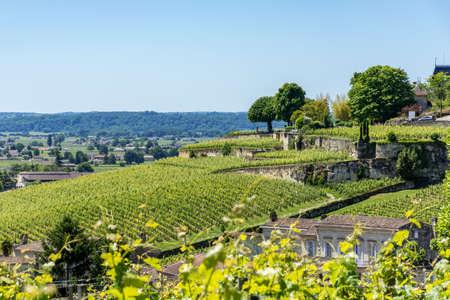 Vignobles de Saint-Emilion près de Bordeaux en France