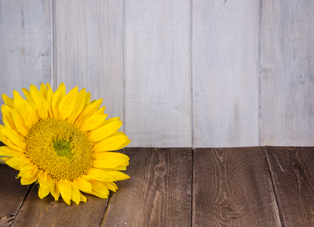 Large yellow sunflower against white and brown distressed wood backdrop