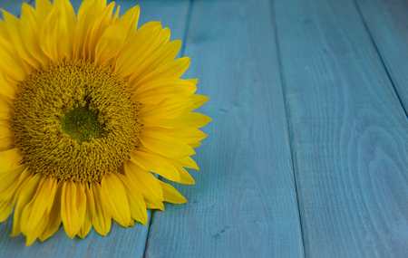 Close up of yellow sunflower on distressed, turquoise, wood backdrop