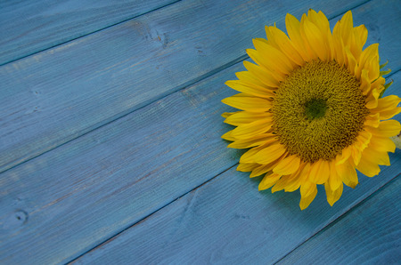 Yellow sunflower on vintage blue background Archivio Fotografico