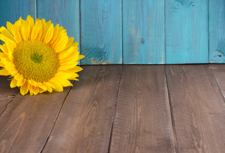 Yellow sunflower on vintage backdrop