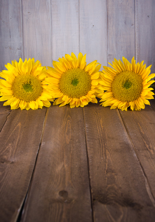 Three yellow sunflowers vertically oriented on vintage backdrop