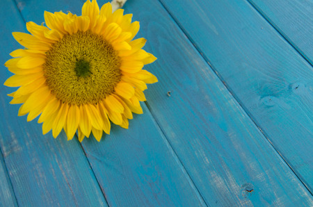 Bright yellow sunflower on vintage wood backdrop