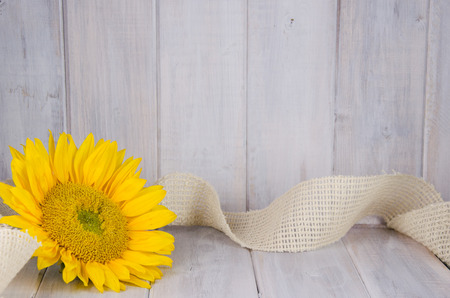 Bright yellow sunflower with burlap ribbon on white distressed backdrop