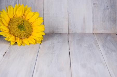 Single yellow sunflower on bright white wood backdrop Archivio Fotografico