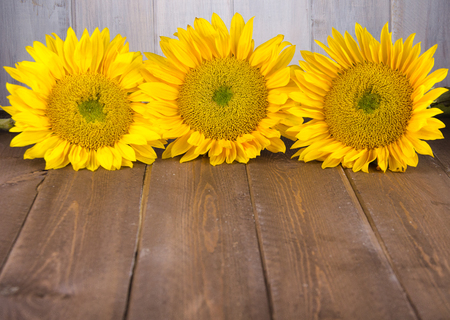 Three yellow sunflowers with brown and white distressed wood backdrop