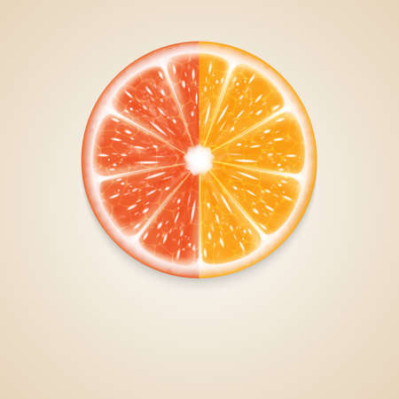 citrus: Citrusvruchten Stock Illustratie