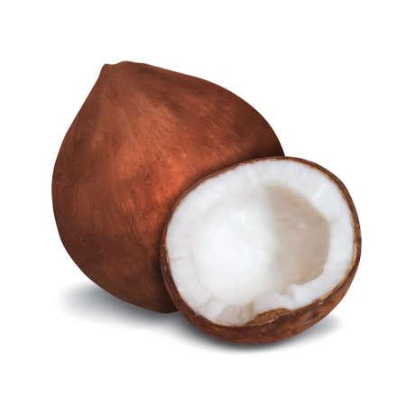noix de coco: Noix de coco Illustration