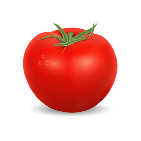 Tomato isolated on white. High quality vector. EPS10 vector.