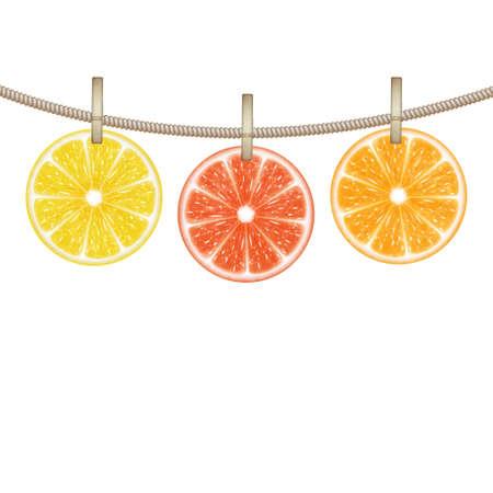 Citrus fruits Illustration