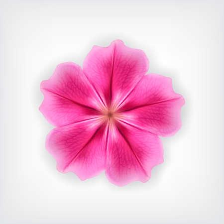 pink flower: Pink flower