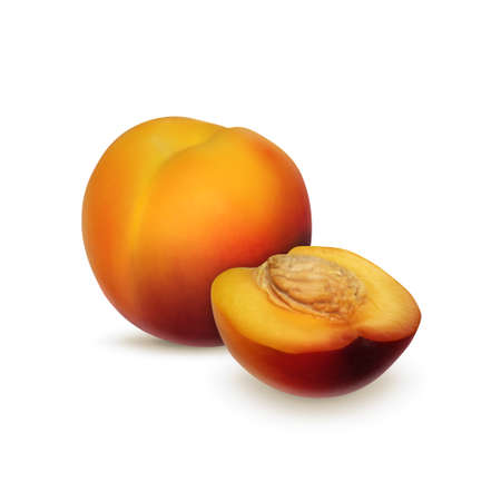nectarine: Nectarine isolated on white. Summer fruit. High quality vector. vector Illustration