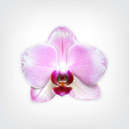 eps10 vector: Orchid flower. High quality vector. EPS10 vector