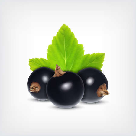 currant: Berries of black currant with green leaf. Vector icon. EPS10