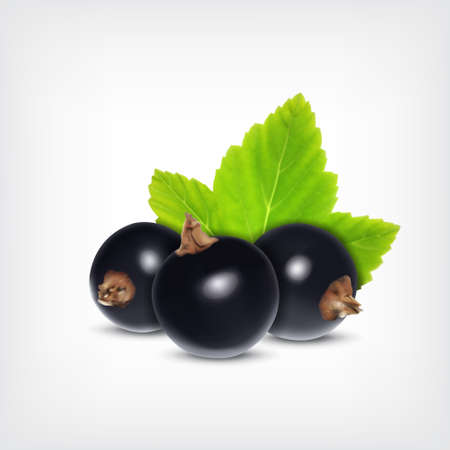 Berries of black currant with green leaf. Vector icon. EPS10