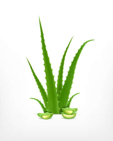 Aloe vera Stock Illustratie