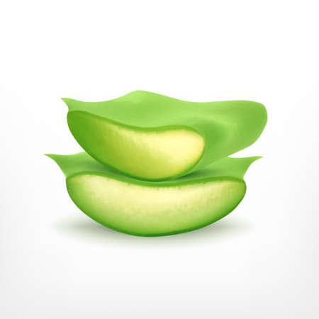 vera: Aloe vera slice