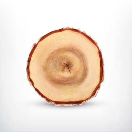 tree stump: Tree stump