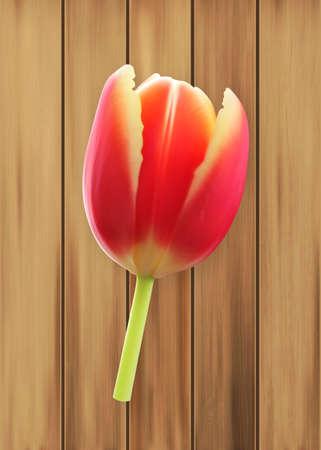 exoticism: Tulip. Spring flower. Illustration