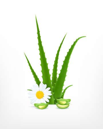 aloe vera: Aloe Vera with chamomile.