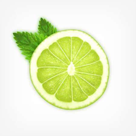 lime slice: Lime slice with mint Illustration