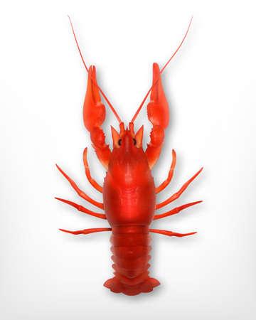 testa: Crayfish Illustration
