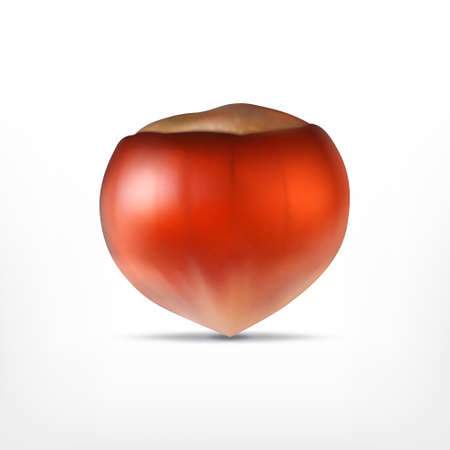 Illustration of a big hazelnut on a white background.