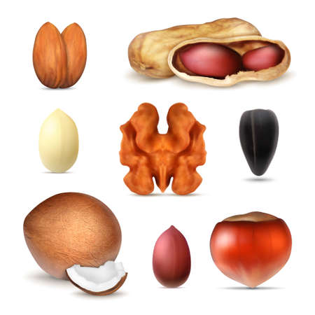 Set of different types of nuts Stock Illustratie