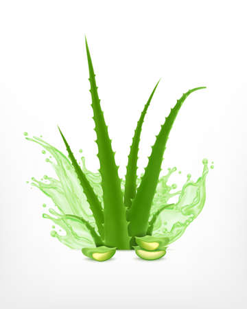 Illustration of green aloe vera plant on a white background.
