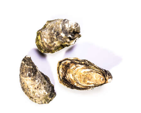 Fresh oysters isolated on white background. Foto de archivo