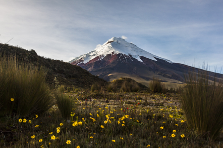 active volcano: Cotopaxi volcano at dawn, approaching its slopes walking through the wilderness