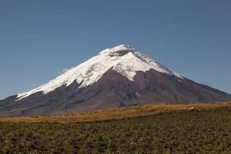 nevado: Cotopaxi Volcano and potato crops in foreground