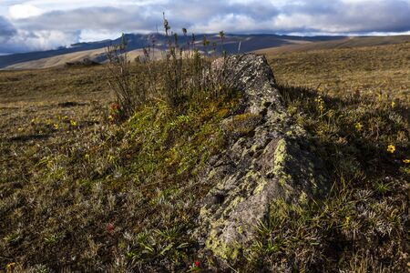bluebell woods: Small natural garden around a rock thrown by the volcano Cotopaxi