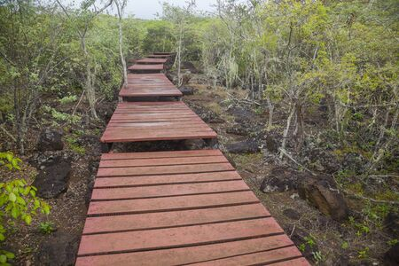 cristobal: Wooden path for tourists in downtown turtle reproduction Isla San Cristobal, Galapagos