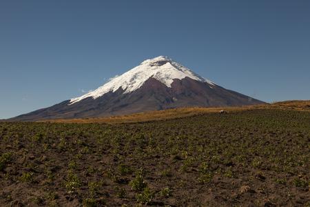 glaciar: Potato crops in Cotopaxi back and blue sky, Andes of Ecuador