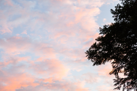hojas: Clouds of orange and red shades of pink on a blue sky framed by a tree branch
