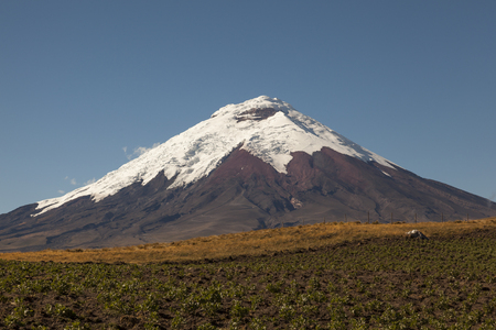 Cotopaxi Volcano and potato crops in foreground Stock Photo