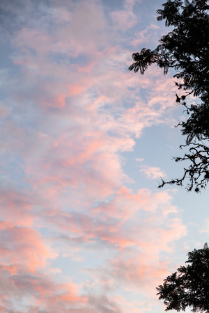 fondo azul: Clouds of orange and red shades of pink on a blue sky framed by a tree branch