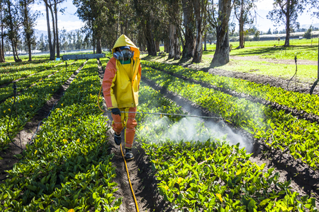 Guayllabamba, Ecuador - MAY 14, 2015: Technical wearing appropriate clothing, fumigating a flower plantation outdoors. Редакционное