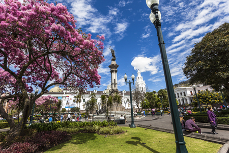 QUITO, ECUADOR - JUNE 30, 2015: Unidentified people visit the Plaza Grande or Independence, on a summer morning when arupos bloom, white churches stand out.