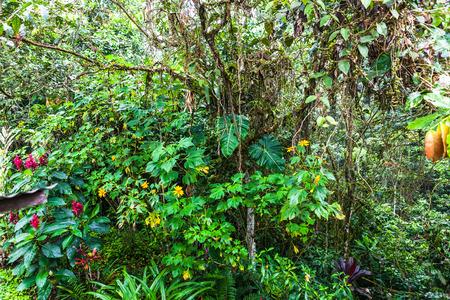 flowery: Flowery corner in the Ecuadorian jungle