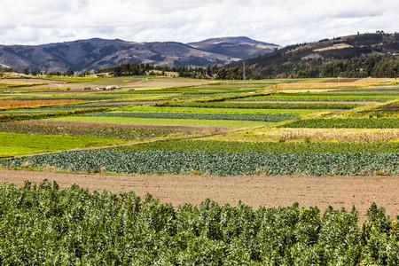 ecuadorian: Cultivated fields at Ecuadorian Andes