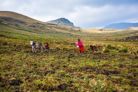 impoverished: Ozogoche, Ecuador, December 19, 2015: Farmers from the community of Ozogoche, growing the field in the highlands of Ecuador Editorial